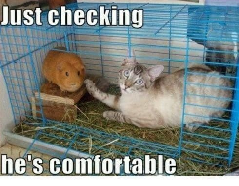 Oh!! Oh!! Oh!! Just Checking He Is Comfortabe