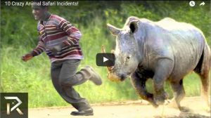 Animals Attacked Human! The Crazy Safari Incident